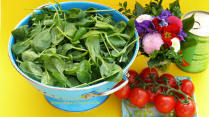 Spinat mit Panir, ayurvedisches Rezept