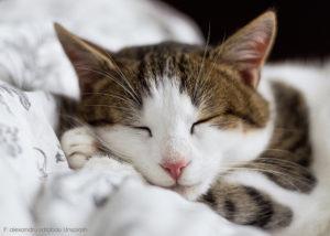 Guter Schlaf, Katze