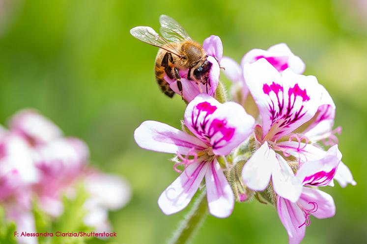 Honig und Bienen, Ayurveda